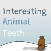 Groundhogs and Other Animals with Interesting Teeth